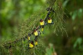 pic of cocoon tree  - Beautiful color of butterfly group on pine tree - JPG