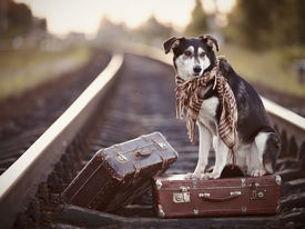 foto of dog tracks  - Dog on rails with suitcases - JPG