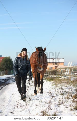 Teenager Girl And Brown Horse Walking In The Snow