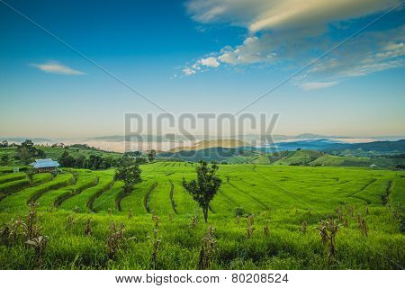 Rolling green hills and rice field