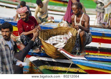 Fishermen unload  catch of the day, Al Hudaydah, Yemen.
