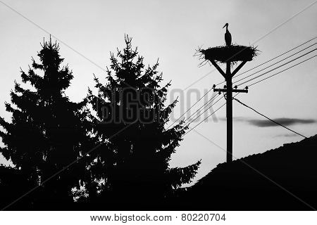 Stork Standing In Nest Bw
