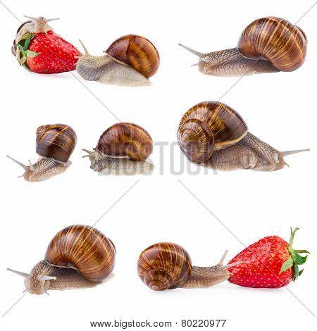 garden snail collection
