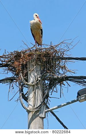 White Stork Nest On Electric Pole