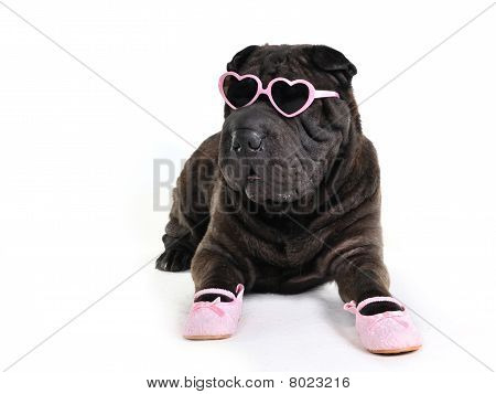 Glamour Dog In Glasses