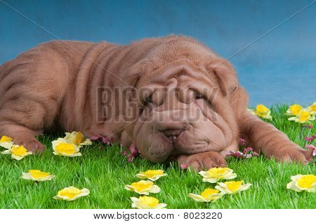 Dog Sleeping On Grass With Flowers