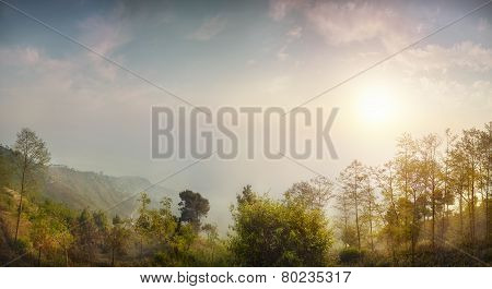 Forest Panorama In Nepal