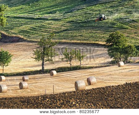 Agriculture Landscape With Straw Bales And A Tractor