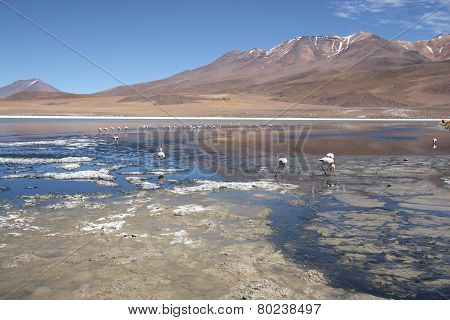 Beautiful landscape with Flamingos in lagoon in Bolivia
