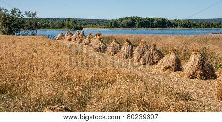 Sheaves In Kizhi