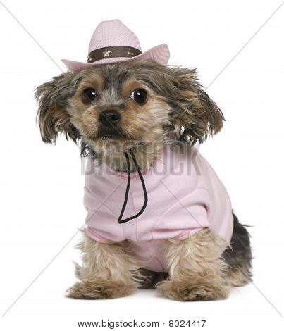 Yorkshire Terrier, 2 Years Old, Dressed And Wearing A Pink Cowboy Hat Sitting In Front Of White Back