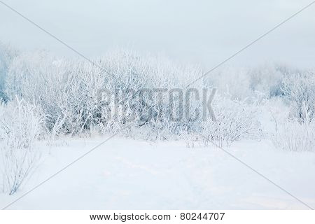 Winter Abstract Landscape Background, Cold Weather