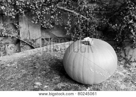 Pumpkin On Lichen-covered Stone