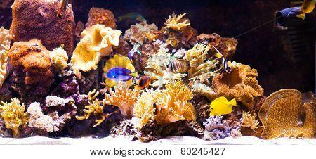 autiful planted tropical freshwater aquarium