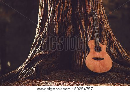 Acoustic Guitar And Tree