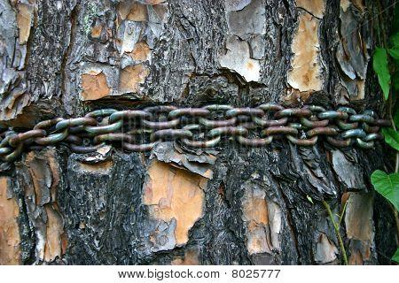 Chain Around Tree
