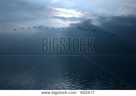 Birds flying over a lake with sunbeams