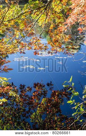 Blue Sky Reflected On Still Pond
