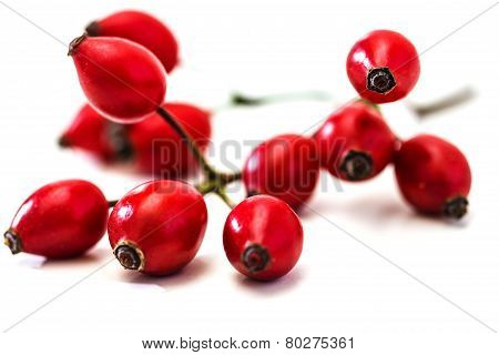 Bunch Of Dogrose. Rosehip