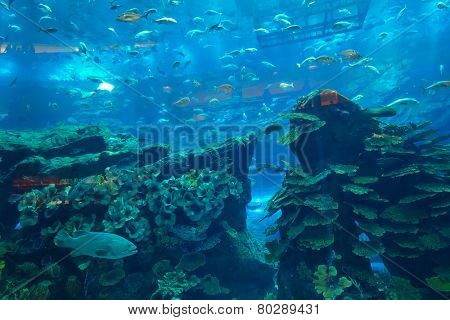DUBAI, UAE - OCT 13: The Dubai Aquarium & Underwater Zoo on October 13, 2014. The Dubai Aquarium & Underwater Zoo with the 10-million litre tank, located on the Ground Level of The Dubai Mall.