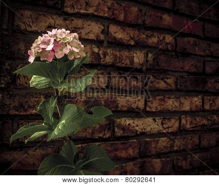 Flower In Front Brick Wall