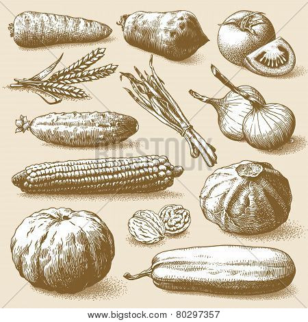 Vegetables, Fruits And Plants Vector