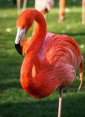 pic of flamingo  - Bright pink flamingos in their natural habitat  - JPG