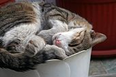 image of flower pot  - Cat sleeping in flower pot - JPG