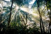 picture of jungle  - Sunrays passing through trees in Chitwan jungle - JPG