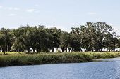 picture of marsh grass  - Trees and grass along a wetland marsh - JPG