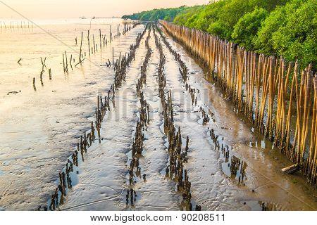 sunset at mangrove forest Bangpu Thailand