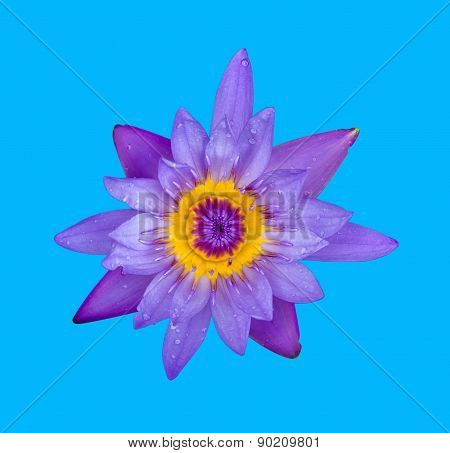 Beautiful blue lotus on blue background