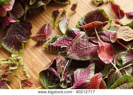 spinach red fresh vegetable organic cooking