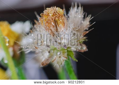 Flower Plant Grass Weed
