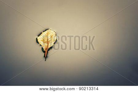 The last breath of a fallen leaf