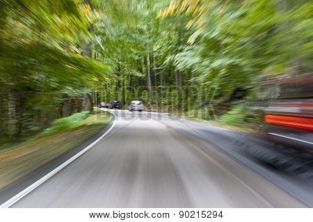 Road InThe Forest