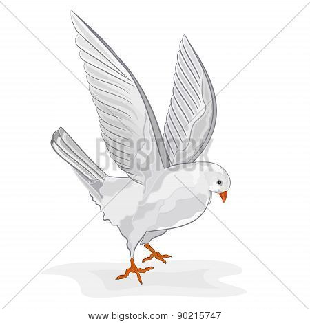 White Pigeon In Flight Vector