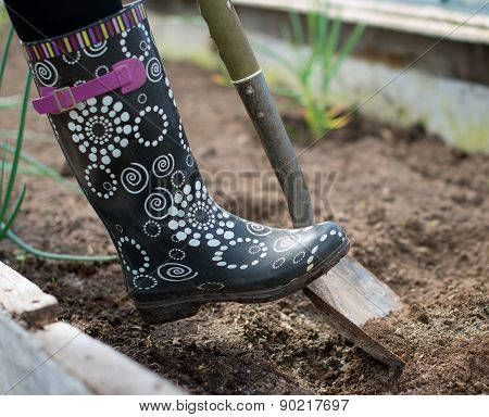 Woman's leg in rubber boot digging soil in greenhouse.