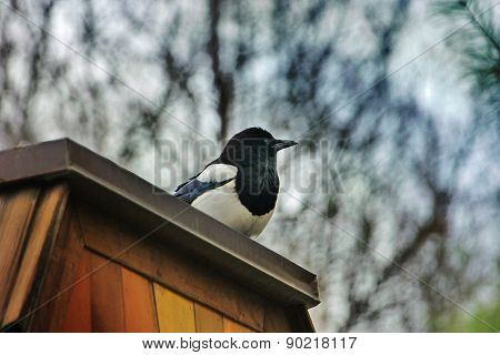 bird on the wooden roof with more colour