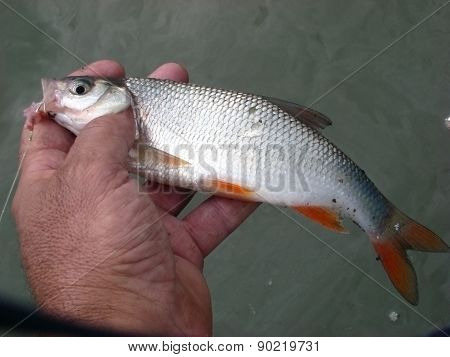Catch and release fish
