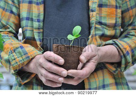 Gardener Holding Seedling