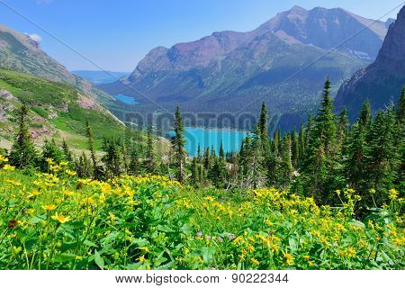 Wild Flowers In Front Of The Grinnell Glacier And Lake In Glacier National Park