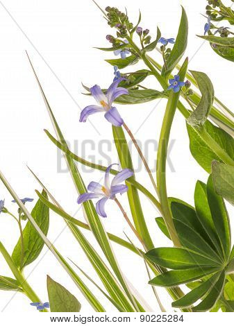 Blue Delicate Flowers And Leaves