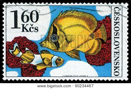 Vintage  Postage Stamp. Amphiprion Percula.