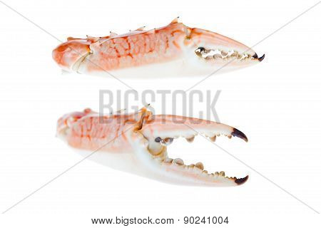 Claws Of Blue Crab,isolated On White Background