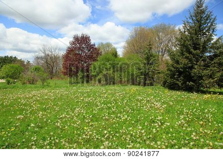 Spring landscape with dandelions on ground