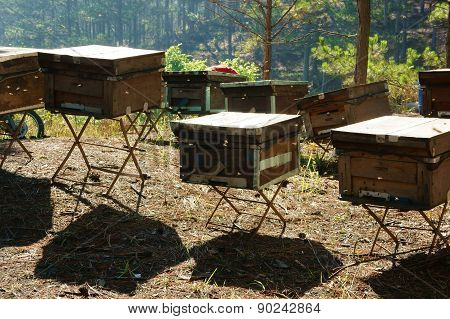 Beekeeping At Vietnam, Beehive, Bee Honey