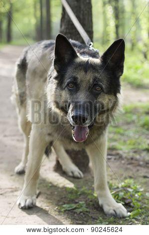Dog Secure