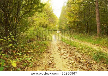 Beauty Autumn Forest Road