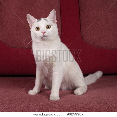 White Cat With Gray Spots Sitting On Couch